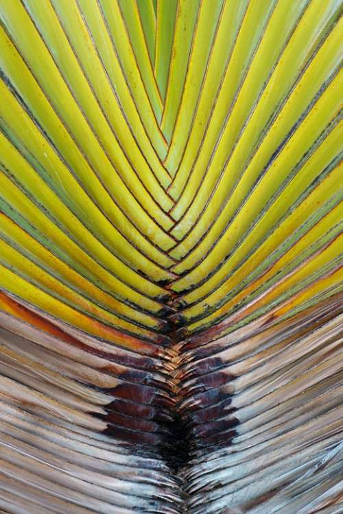 Backdrop Background Flora Geometric Geometrical