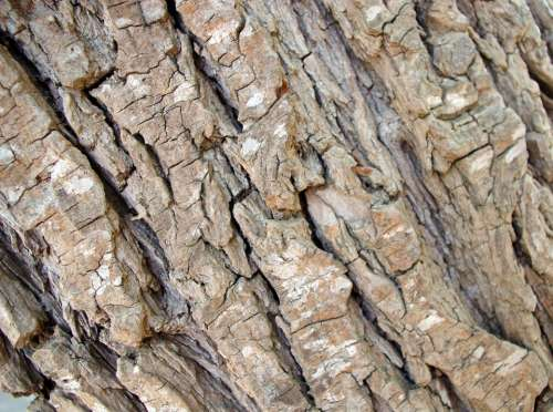 Background Texture Rough Tree Bark Design Web