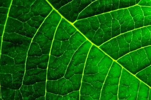 Background Organic Macro Green Environmental