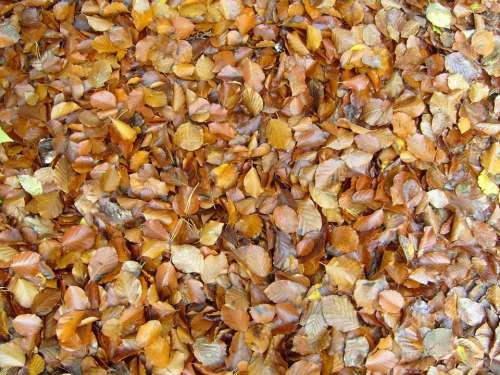 Background Autumn Leaves Leaf Landscapes Nature