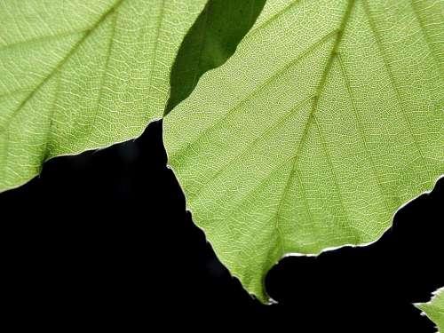 Background Black Leaves Leaf Landscapes Nature
