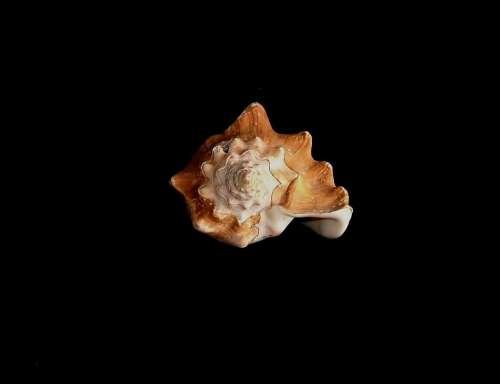 Background Dark Shell Sea