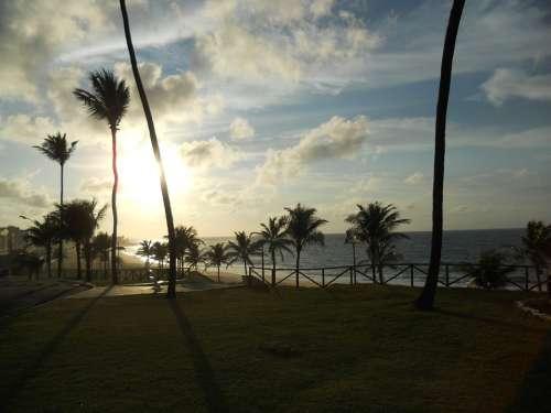 Bahia Amaralina Sol Mar Coconut Trees Travel