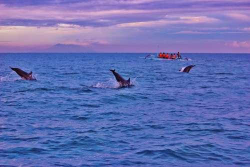 Bali Dolphins Sunrise Lovina Indonesia Ocean
