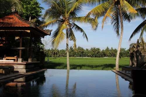 Bali Indonesia Pool Palms Resort Vacations