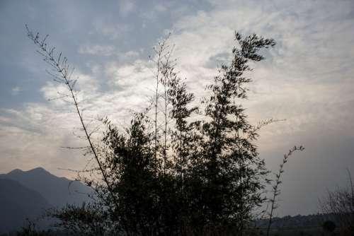 Bambbo Bush Cloud Sunset Sky Nature Plants Brush