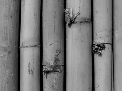 Bamboo Bamboo Forest Leaves Bamboo Shoot Branch