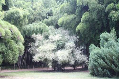 Bamboo Ardèche Plant Botanical Garden