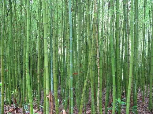 Bamboo Green Close Moist Lush