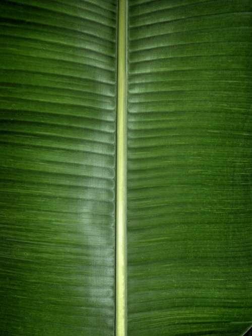 Banana Leaf Green Nature Fresh Natural Food