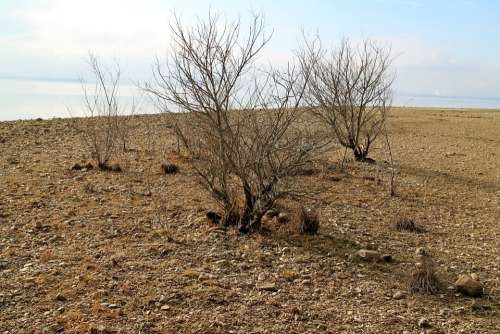 Bank Coast Beach Tree Bush Dry Arid Alone