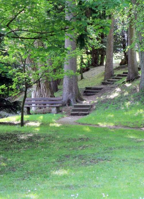 Bank Bench Stairs Gradually Forest Nature