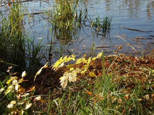 Bank Autumn Fall Foliage Water Landscape Lake