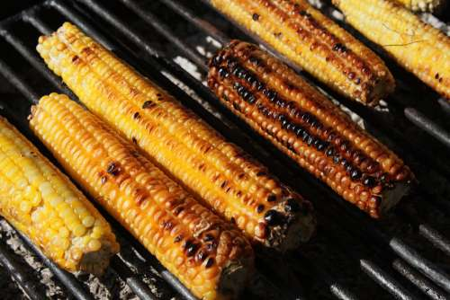 Barbecue Corn Fresh Grill Grilled Healthy Sweet