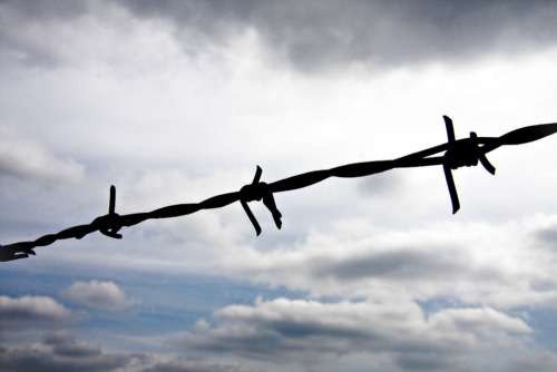 Barbed Wire Fence Wire Thorn Metal