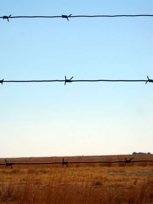Barbed Wire Wire Fence Barbed Sharp Straight
