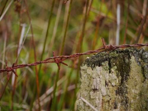 Barbed Wire Rust Metal Wire Rusted Thorn Fenced