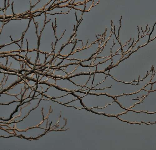 Bare Branches Tree Branches Twigs Bare Grey