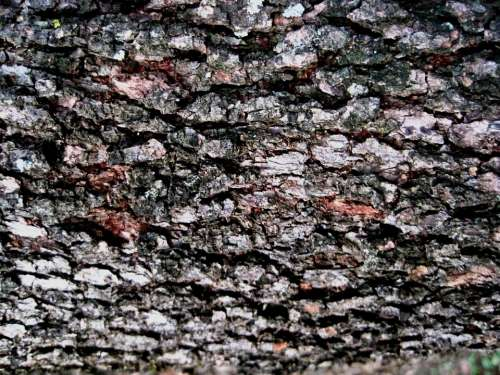 Bark Tree Rough Textured Patterned