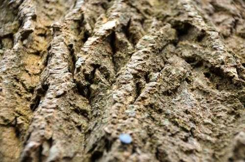 Bark Tree Log Wood