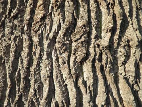 Bark Tree Bark Oak Old Close Up Log Structure