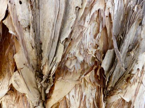 Bark Paper Bark Texture Pattern Rough Surface