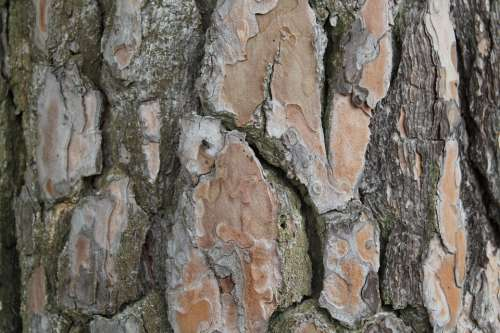 Bark Tree Log Nature Forest Wood Structure