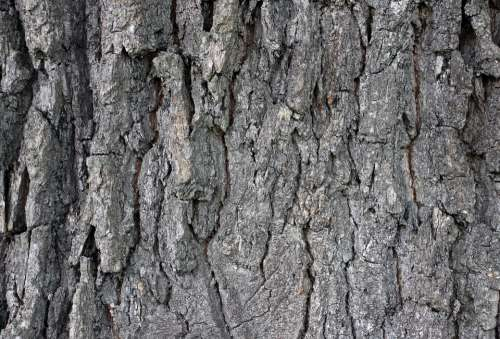 Bark Wood Tree Log Tree Bark Structure Background