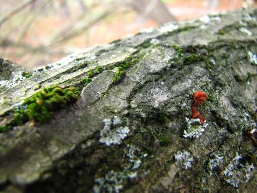 Bark Mushroom Moss Autumn Nature Plant Flora