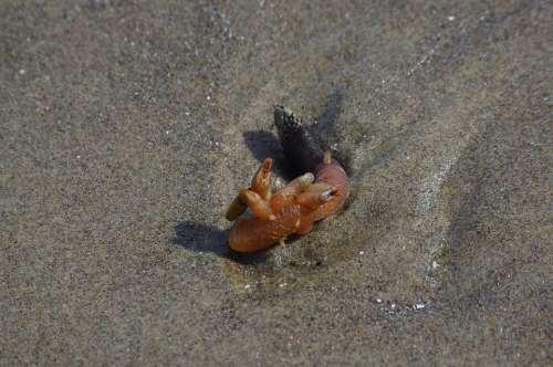 Barnacle Animal Sea Creature Sea Underwater Marine