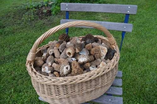Basket Mushroom The Catch Morel