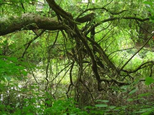 Baustamm Gnarled Forest Tree Nature Landscape