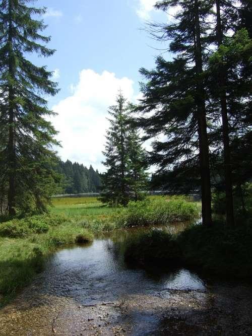Bavarian Forest Trees Nature Hiking Landscape