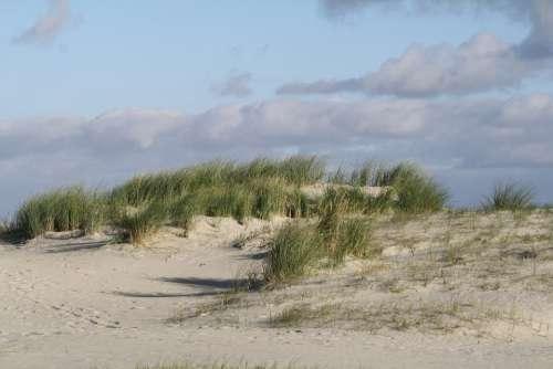 Beach Dunes North Sea