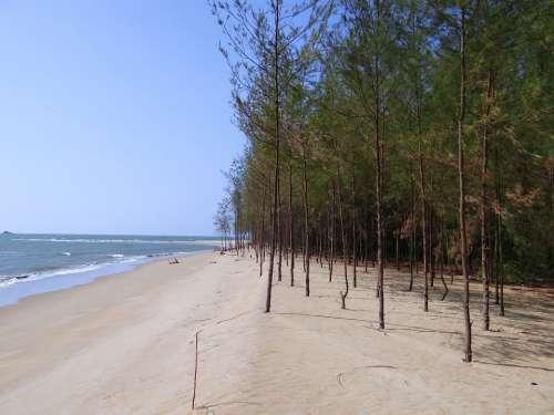 Beach White Sand Casuarina Forest Arabian Sea