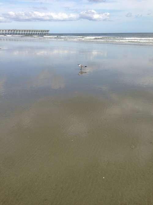 Beach Seagull Water Sand Waves Ocean