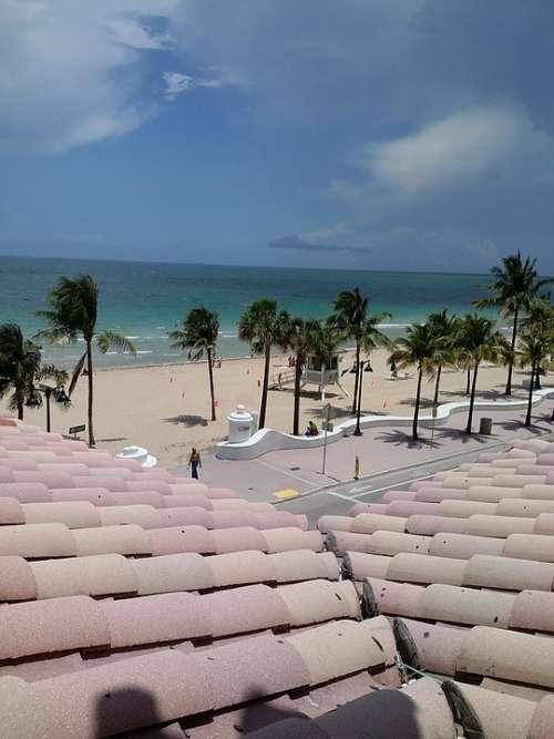 Beach Palm Trees Sand Palm Tropical Summer Sea