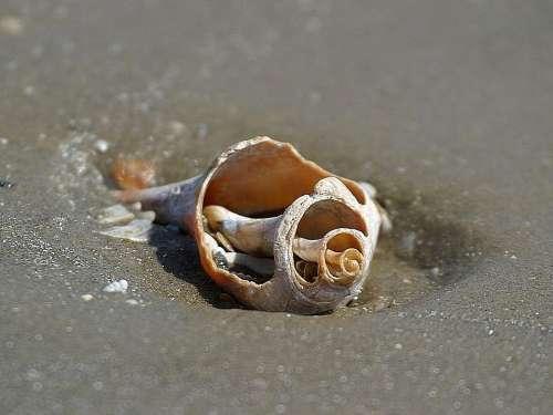 Beach Oceans Sand Shells Beaches Landscapes