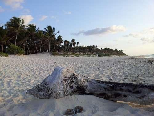 Beach Tulum Palms Sand Sky Dawn Calm Solo