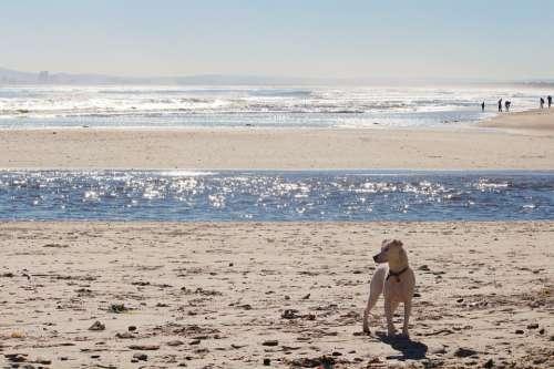 Beach Sea Surf Dog Wave Water Sand Mirroring