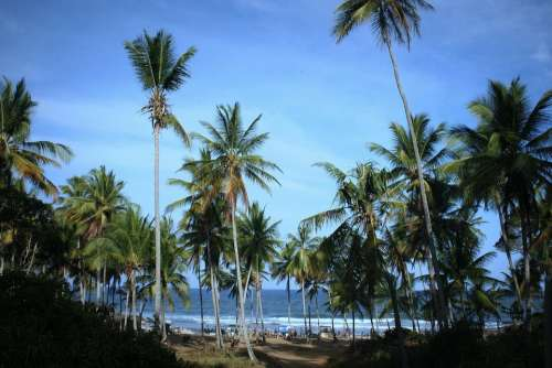 Beach Mar Coconut Trees Cottage Bahia