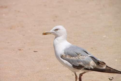 Beach Food Drink Garbage Sand Scavenger Seabirds