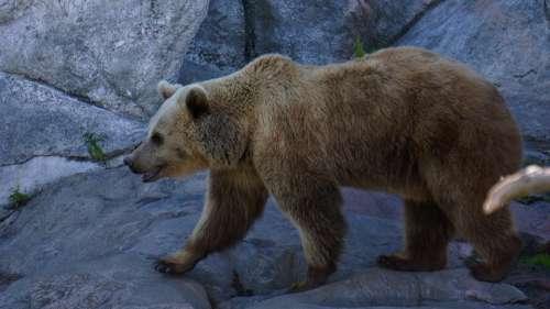 Bear Teddy Bear Predator Zoo The Bear Ozone