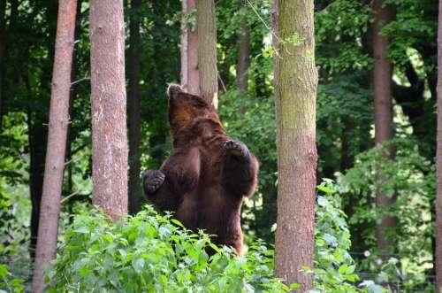 Bear Forest Eco-Park Güstrow