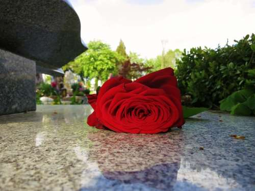 Beauty Red Rose Rose Bloom Tombstone Farewell