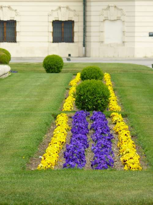 Bed Flower Bed Colorful Color Spring Bloom