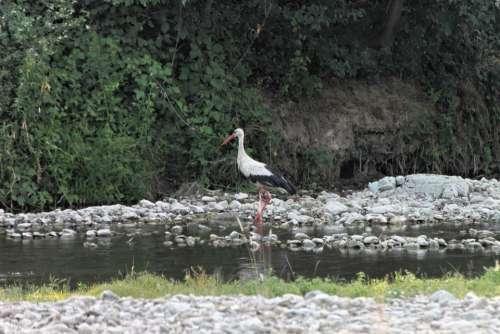 Bed River Stork Water White Birds