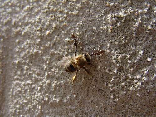 Bee Ants Power Clock