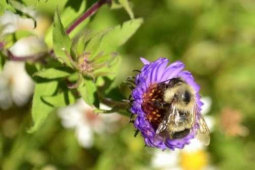 Bee Flower Nature Purple Wildflower Blossom Bloom