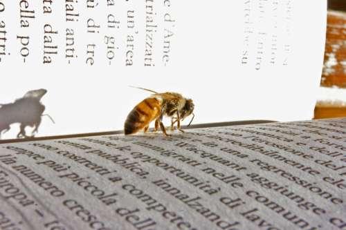 Bee Book Rifkin